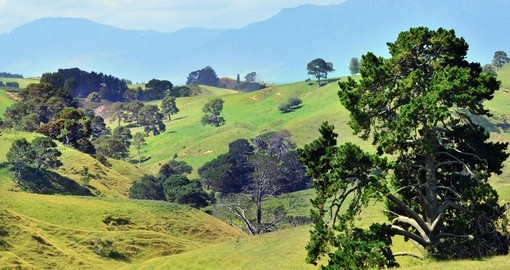 Explore the green pastures pf Matamata and visit the Hobbiton movie set during your New Zealand Vacation