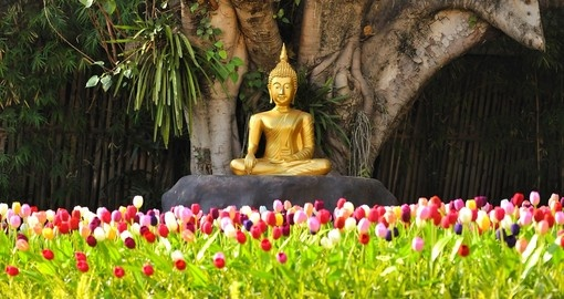 There are many Buddhist shrines located throughout Chiang Mai which you will see while on a Thai Tours