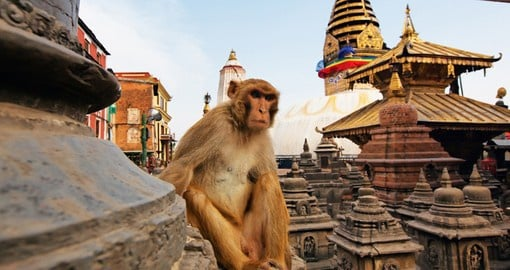 Wander around Kathmandu and stop at the Swayambhunath monkey temple on one of your Nepal Tours