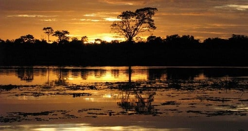 Experience Cruising the Amazon on your next trip to Brazil.