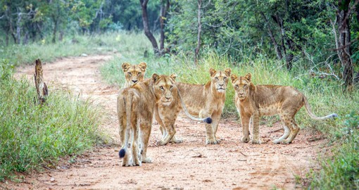 A visit to the Kruger National Park is included in your South Africa Travel itinerary