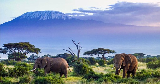 Amboseli is renown for it's large elephant herds and views of Kilimanjaro