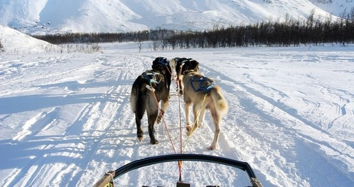 Dog sledging around the Arctic Circle