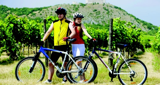 Cycling through a Vinyard