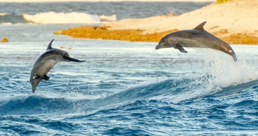 Wild Dolphins at Tiputa Pass in Rangiroa.