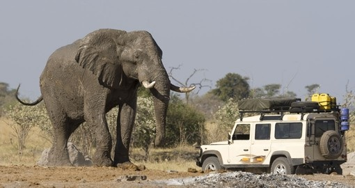 On a game drive in Botswana - always a great wildlife experience when on your Selinda Reserve safaris.