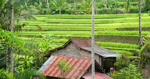 Experience Rice Terrace Field on your next Indonesia Vacations.