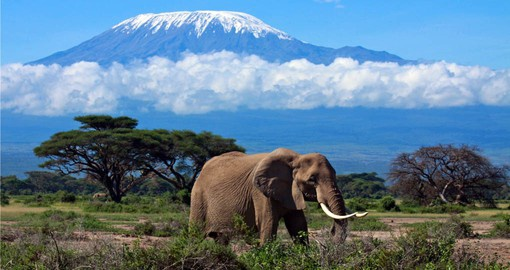 In the shadow of Africa's highest peak, Aboseli is famed for it's big-tusked elephants