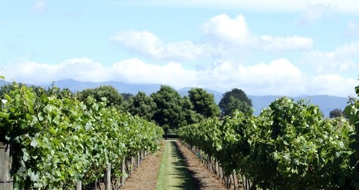 Visit this amazing vineyard Wairarapa Wine Region during your next trip to Australia.