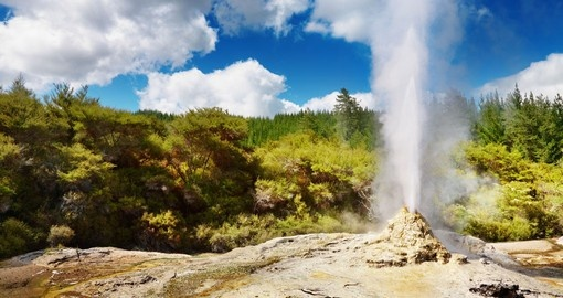 "See Lady Knox geyser ""spouting off"" in Rotorua"