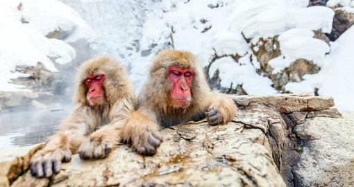 Like humans, snow monkeys cope with winter weather by taking warms baths