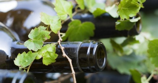 Wine bottles and grape vines