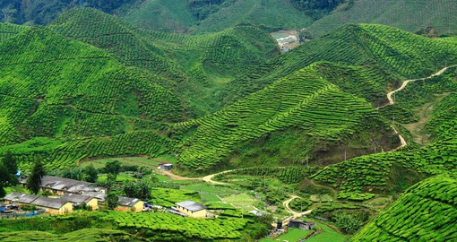 Wander through the Cameron Highlands and enjoy time in the tea plantations that are scattered on the mountain side on one of your Malaysia Tours