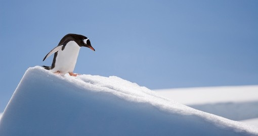 Penguin sliding down the slopes