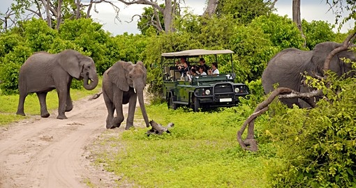 You will have the opportunity to safari through the Chobe National Park during your cruise in Botswana