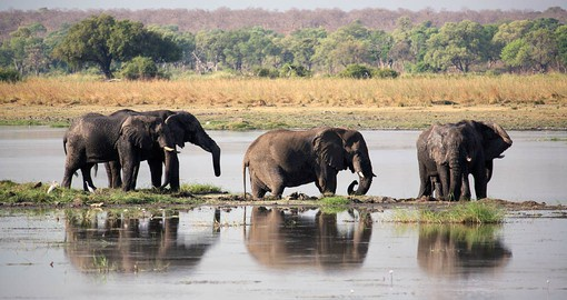 Fondly known as 'The Land of The Giants', Chobe National Park in Botswana is home to Africa's largest elephant population