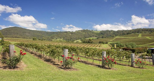 Venture into Hunter Valley and visit some of the main vineyards that produce some of the country's best wine on your Australia Vacations .