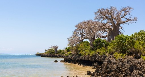 Wild African coast with cliffs and baobab trees on the island of Pemba