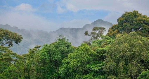 Beautiful Rainforests surround the One&Only Nyungwe House on your Rwanda Vacation