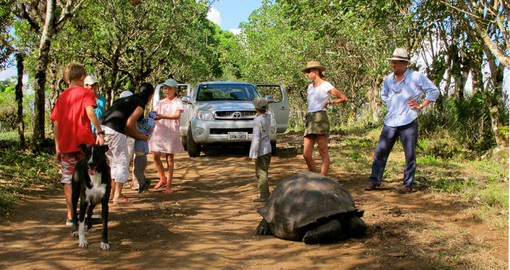 Share some time in the giant tortoises' natural habitat