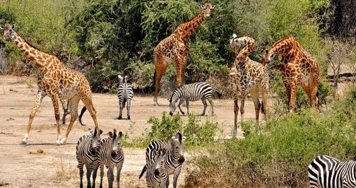 Watch lake Manyara Visitors during your next Tanzania tours.