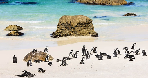 Make friends with penguins on your South Africa vacation