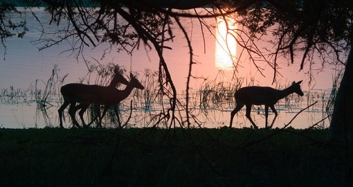 Impala silhouetted against the Sunset