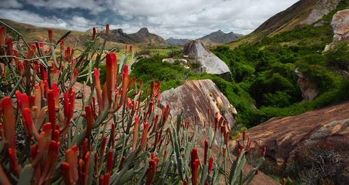 Red flowers and rocky land