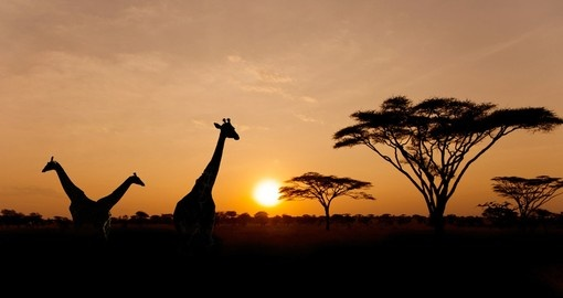 Enjoy indescribable beauty of  Serengeti sunset during your next Tanzania vacations.