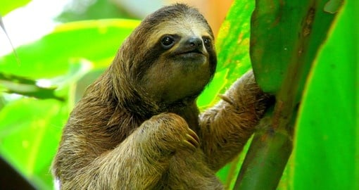 Cuddle a sloth on your Costa Rica Vacation