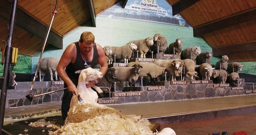 Visit the Agrodome on your New Zealand vacation
