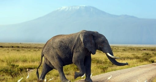 Elephant, Mt. Kenya National Park - A great photot opportunity on your Kenya safari.