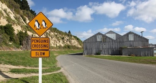 It is one of the places you will see Penguin Crossing Sign during your next trip to New Zealand.