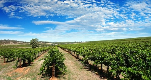 Immerse yourself in the rich culture and tastes of the Barossa Valley on your next trip to Australia.