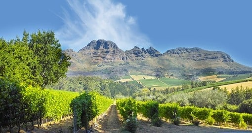 Discover amazing wineries on your next South Africa vacations.