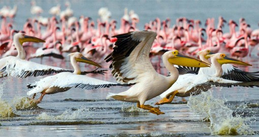 On the floor of the Great Rift Valley, Lake Nakuru is among Kenya's finest national parks
