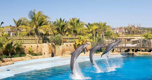 Enjoy a Dolphin show at Ushaka Marine World on your South Africa Vacation