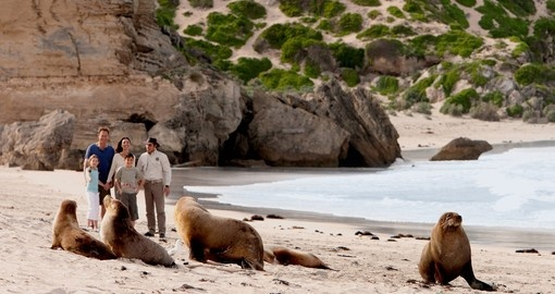 Seal Bay is an amazing experience on Kangaroo Island