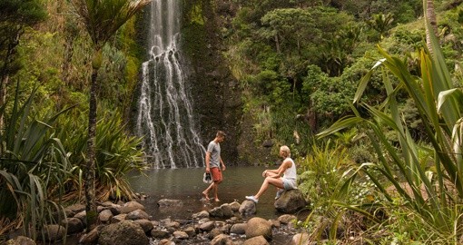 Stroll through the natural forests of Auckland and enjoy peace and serenity during your New Zealand Vacation.