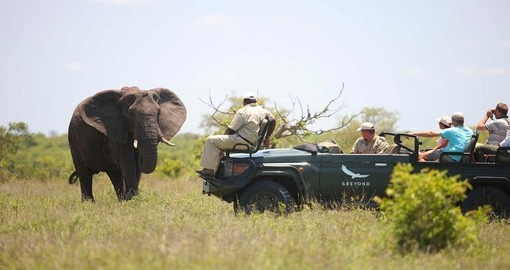 Game drives are included in this South Africa vacation package to &Beyond Ngala Safari Lodge
