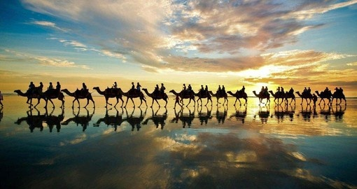 Your Australia Vacation includes a Camel Ride in Broome, Western Australia