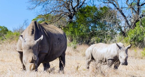 See members of the Big 5 on your South Africa safari