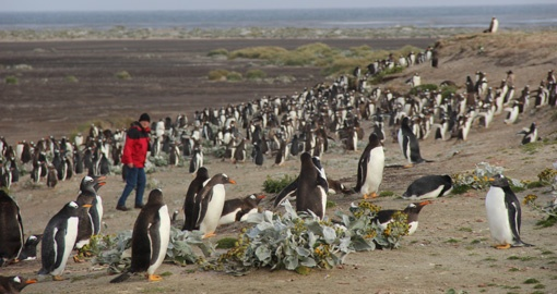 Mix with locals on your Falklands trip