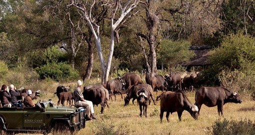 Game drives at Kings Camp are included during this South Africa trip.