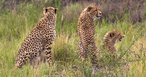 See the Big 5 on your South Africa Tour