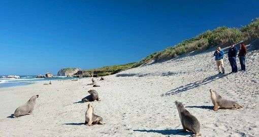Known as Australia's Galapagos, Kangaroo Island is a highlight of any Australia vacation