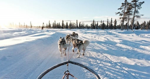 Experience a family dog sledding on your next trip to Sweden.
