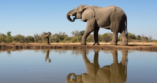 A gigantic elephant bull next to a waterhole