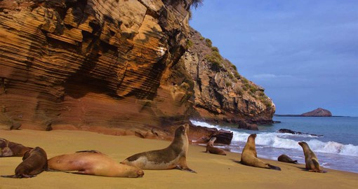 Unique wildlife including the Galapagos Sea Lion are featured on your Galapagos vacation package