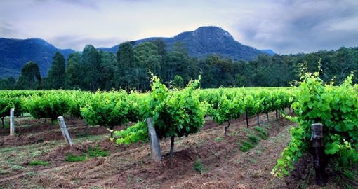 Hunter Valley Vineyards